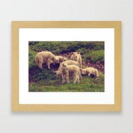 Lambs Framed Art Print