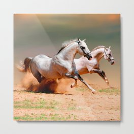 two white horses running Metal Print