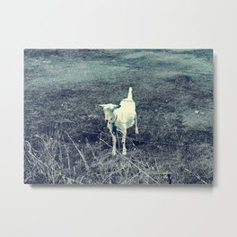 Independent Goat Metal Print