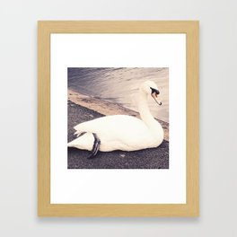 The Swan Framed Art Print