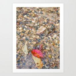 Red Leaf Stuck Among Watery Rocks Art Print