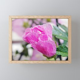 Pink Musk Mallow Rolled-up Framed Mini Art Print