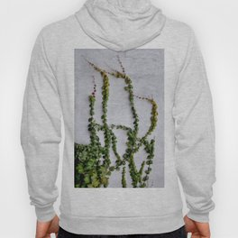 Upward Climbing (green vine on grey wall) Hoody