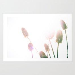 Bullrushes Art Print