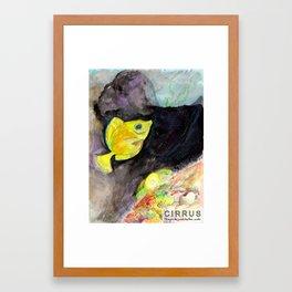 CIRRUS/ Surgeonfish Framed Art Print