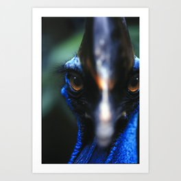 Cassowary Bird Art Print