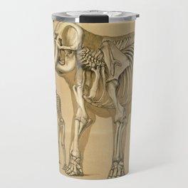 Benjamin Waterhouse Hawkins - Vintage Illustration - Elephant and Man Skeletons Travel Mug