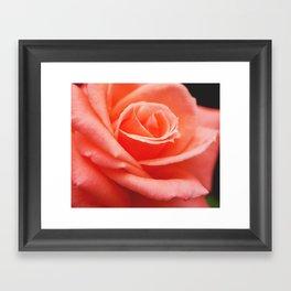 Peach Delight. Framed Art Print