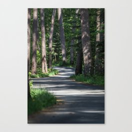 Itasca's Winding Road Canvas Print