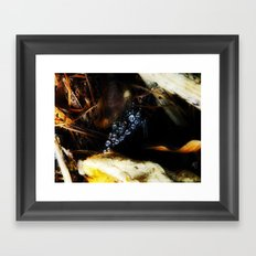 Autumn Glory Framed Art Print