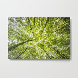Tree Forest Sky Metal Print