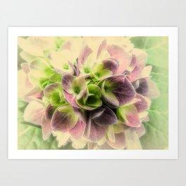Soft Hydrangea Flower Modern Country Farmhouse Art A422 Art Print