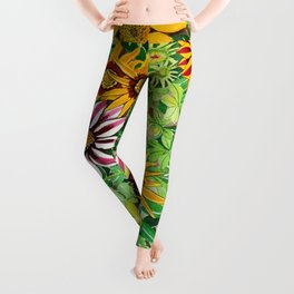 Gazanias Leggings