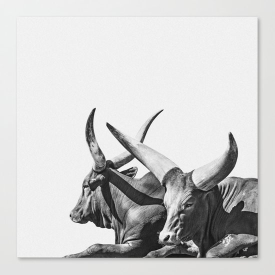 Animal Photography | Ankole-Watusi | Cattle | Bull | Steer | Black and White by wildhood