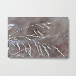 Grass Seed Heads Metal Print