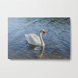 Lonely Swan Metal Print
