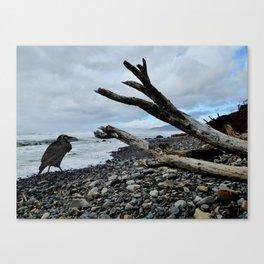 Salty Raven stormy beach Canvas Print