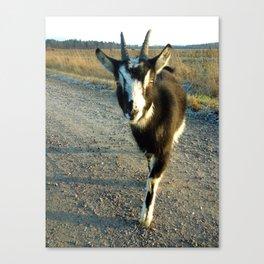Siri the goat Canvas Print