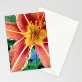Daylily Stationery Cards