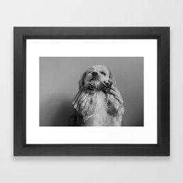 IT'S A DOGS LIFE Framed Art Print