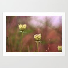Queen Annes Lace In The Field Art Print