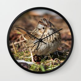 Staredown with a Lincoln's Sparrow Wall Clock