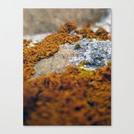 Orange lichen macro Canvas Print
