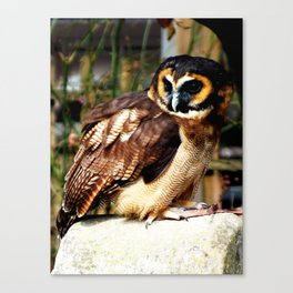 Brown Wood Owl Canvas Print