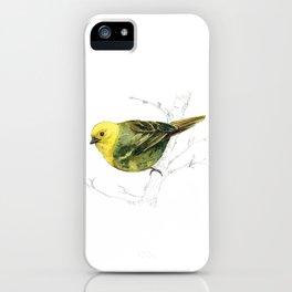 Mr Mohua , yellowhead New Zealand native bird iPhone Case