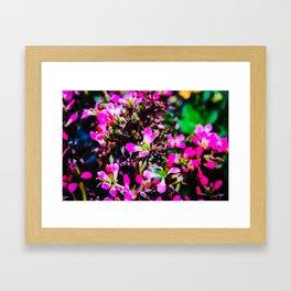 Cinematic Flowers Framed Art Print