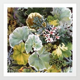 Geraniums Galore Art Print