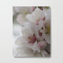 Almond Blossom Series 2 Metal Print