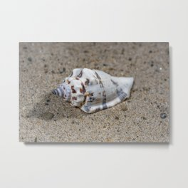 spotted sea snail shell Metal Print