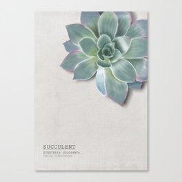 Succulent botanic print grey Canvas Print