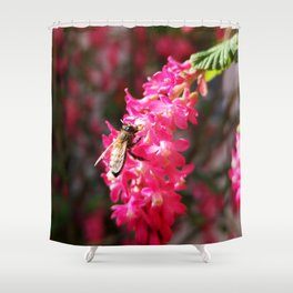 Bee2 and Blood Currant Ribes Sanguineum std Shower Curtain