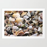 shells Art Prints featuring Shells by BACK to THE ROOTS