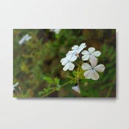 White little flower Metal Print