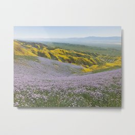 California Wildflowers Metal Print