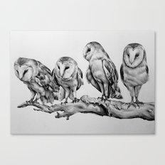 Barn Owls Canvas Print