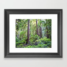 The Light Through the Woods Framed Art Print