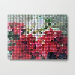 Mixed color Poinsettias 3 Mosaic Metal Print