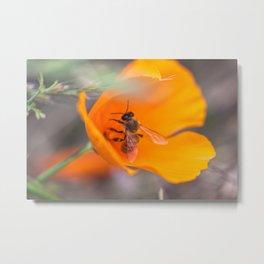 Bee in Poppy Metal Print