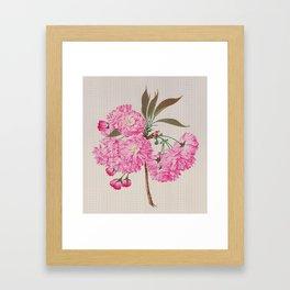 Barrier Mountain Cherry Blossoms Watercolor Framed Art Print