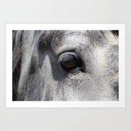 Horse Wall Art Fall Print Nature Art Print Equestrian Print Horse Photography Wildlife Photography Autumn Decor, Wild Horse Print