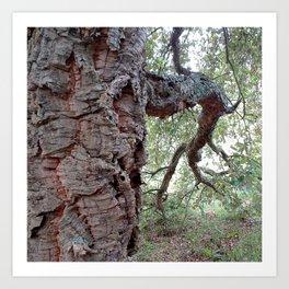 Cork Oak Tree Forest 1 Art Print