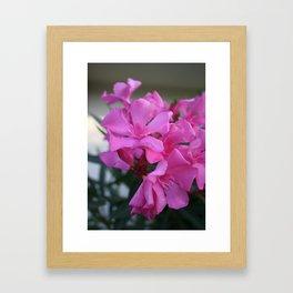 Pink Oleander Bunch Framed Art Print