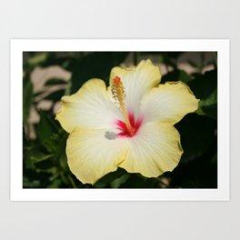 Yellow Hibiscus With Garden Background  Art Print