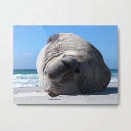 Southern Elephant Seal Metal Print