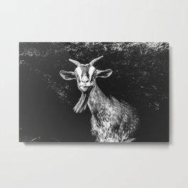 Goat in Ninh Binh Metal Print