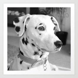 Spotty Dotty Dalmatian Dog Art Print